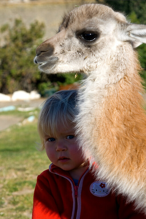 """The bus stopped on the way from El Calafate to El Chalten in a small coffee shop in the middle of nowhere. There was a <a href=""""http://en.wikipedia.org/wiki/Guanaco"""">Guanaco</a> in the yard, but this little girl stole most of the attention..."""